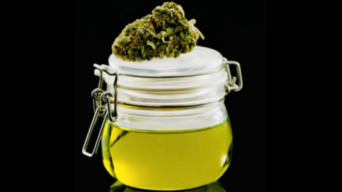 HOW TO MAKE CBD OIL AT HOME: BECOME AN EXPERT!